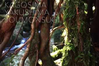 KAGOSIMA & YAKUSHIMA 3rdDAY