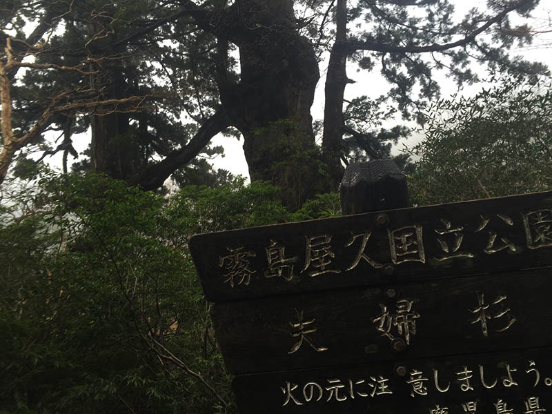 kagoshima-yakushima-joumonsugi122