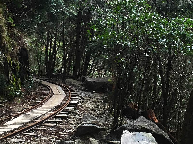 kagoshima-yakushima-joumonsugi156