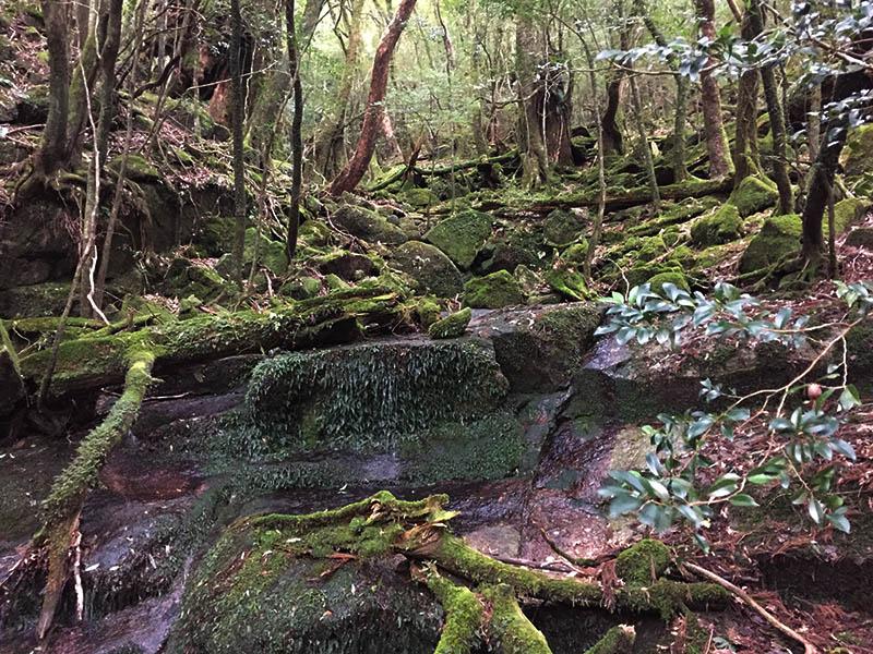kagoshima-yakushima-joumonsugi166