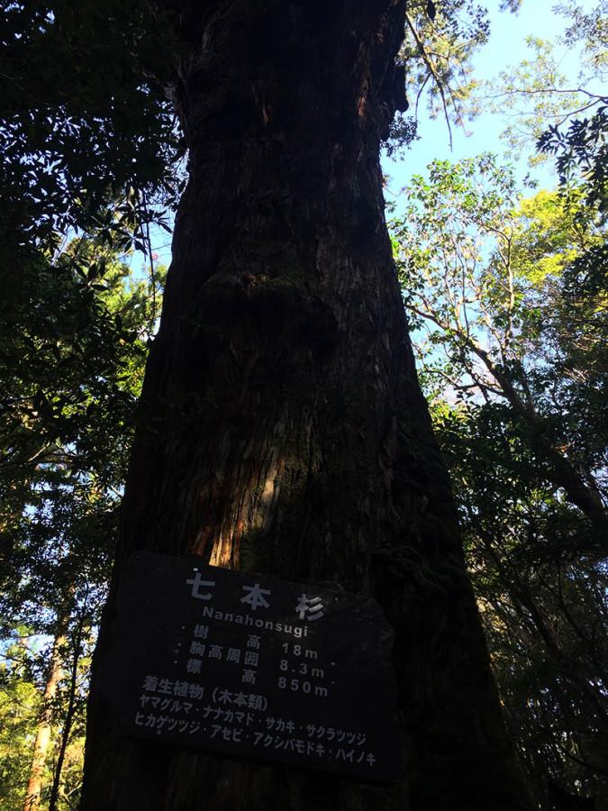 kagoshima-yakushima-joumonsugi269