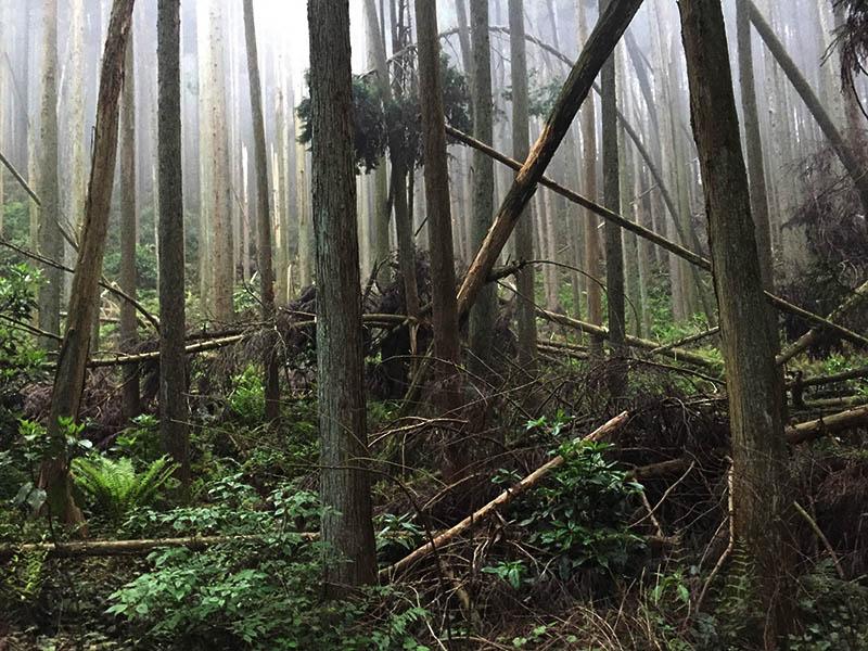 shizuoka-camp24
