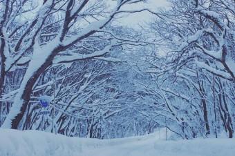 HOME TOWN #aomori #hakkouda #towadako #oirase