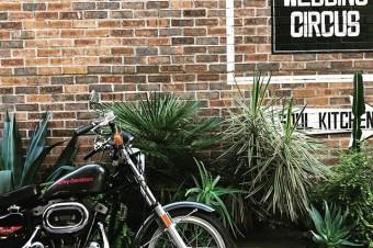 SUNDAY MORNING #harleydavidson #sportster #shovelhead #shovelsports #ironhead #vintage #xlh #xlch #77xlh #xlh1000 #sportymania #vintagemotorcycle #ironsports #japan #tooeysworks#garagelife#crassicmotorcycle