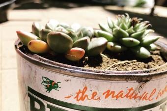 GREEN#briwax #green #plant